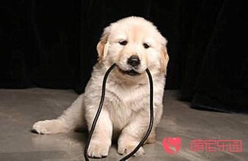 成长期狗狗经常呕吐怎么办?